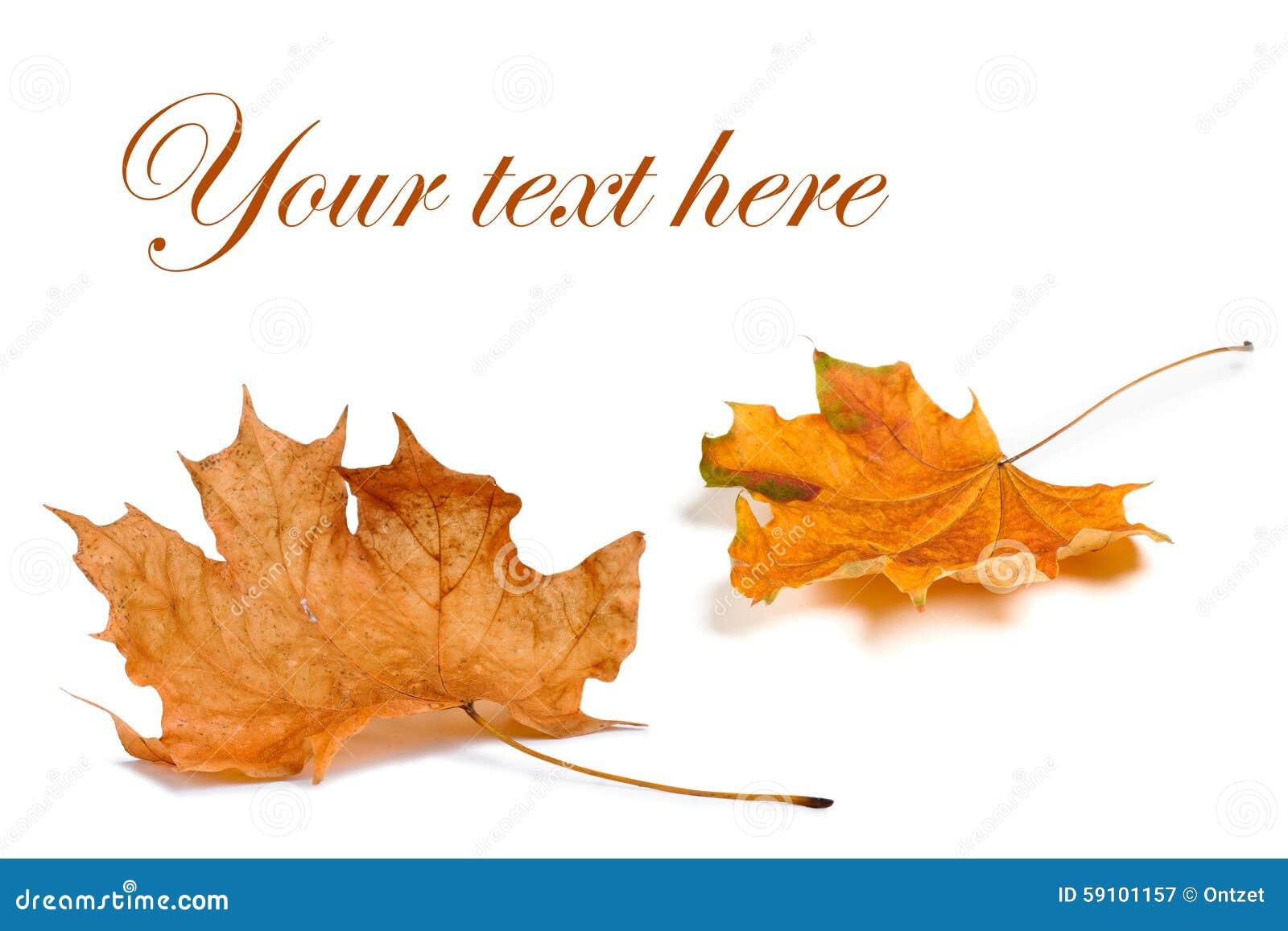 秋天背景查出的叶子白色