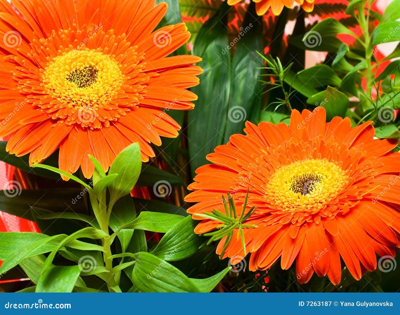 秋天背景花