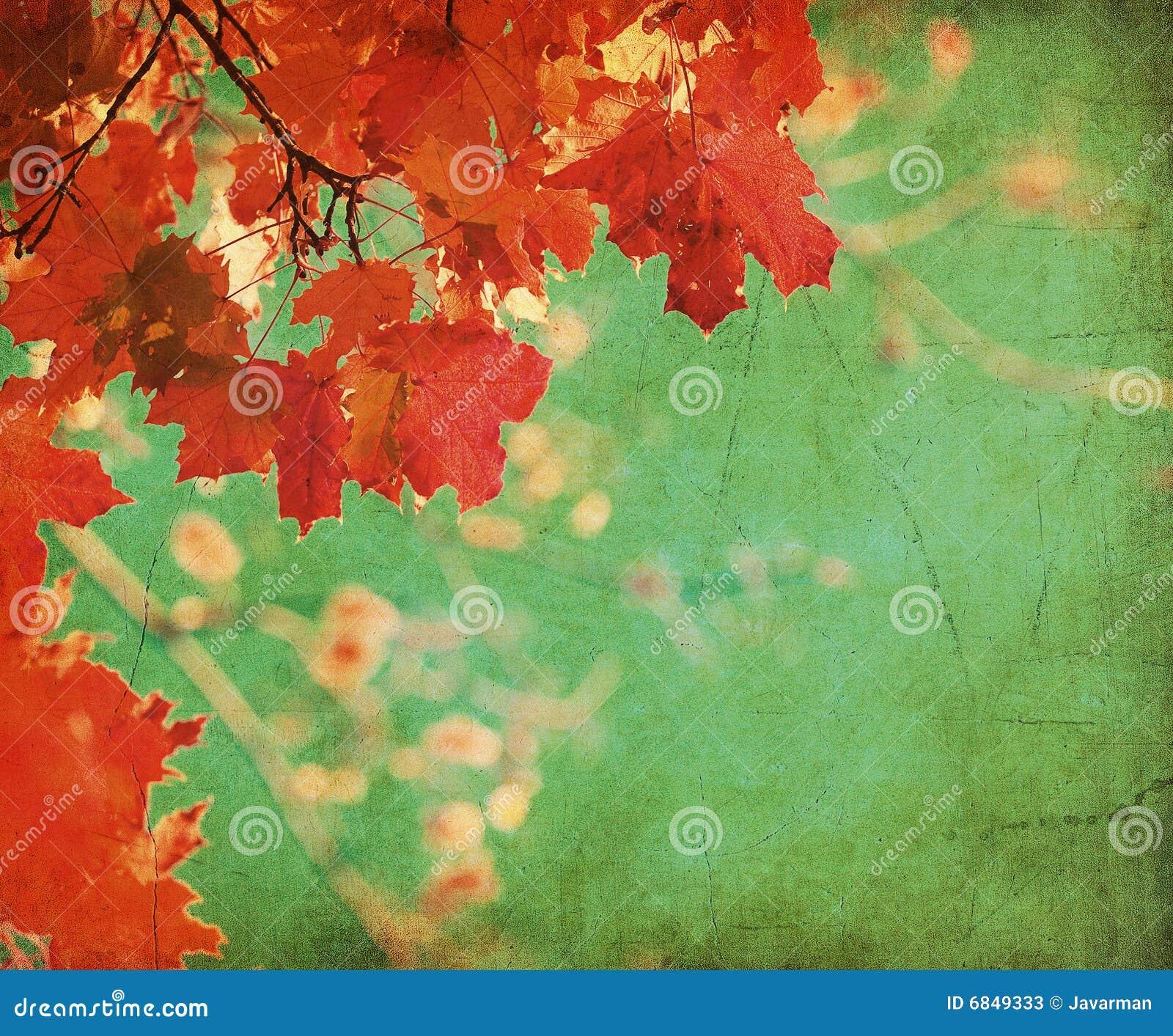 秋天背景grunge叶子