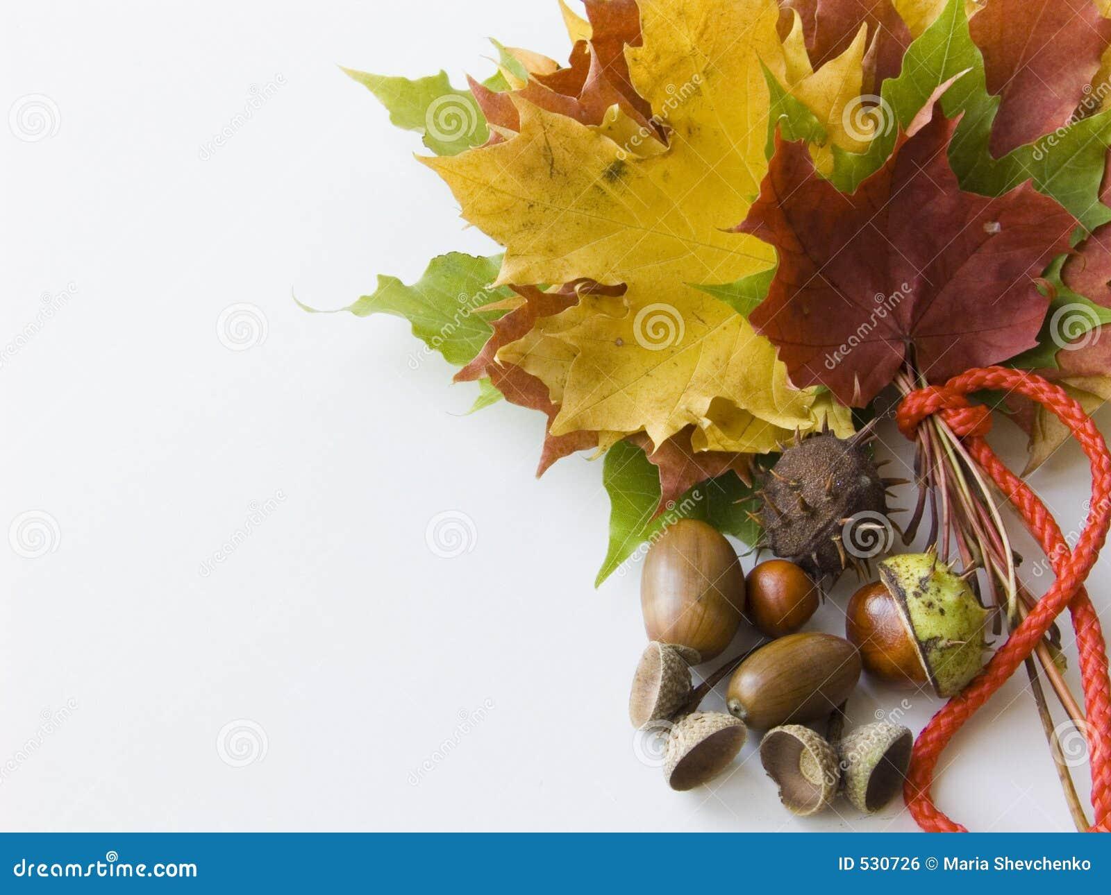 Download 秋天花束 库存照片. 图片 包括有 红色, 公园, 秋天, 栗子, 循环, 装饰, 自然, 叶子, 更改, 五颜六色 - 530726