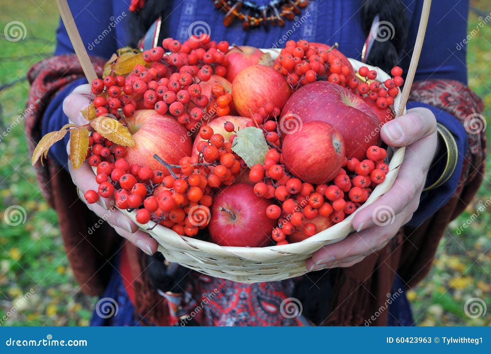 秋天苹果和花楸浆果在篮子