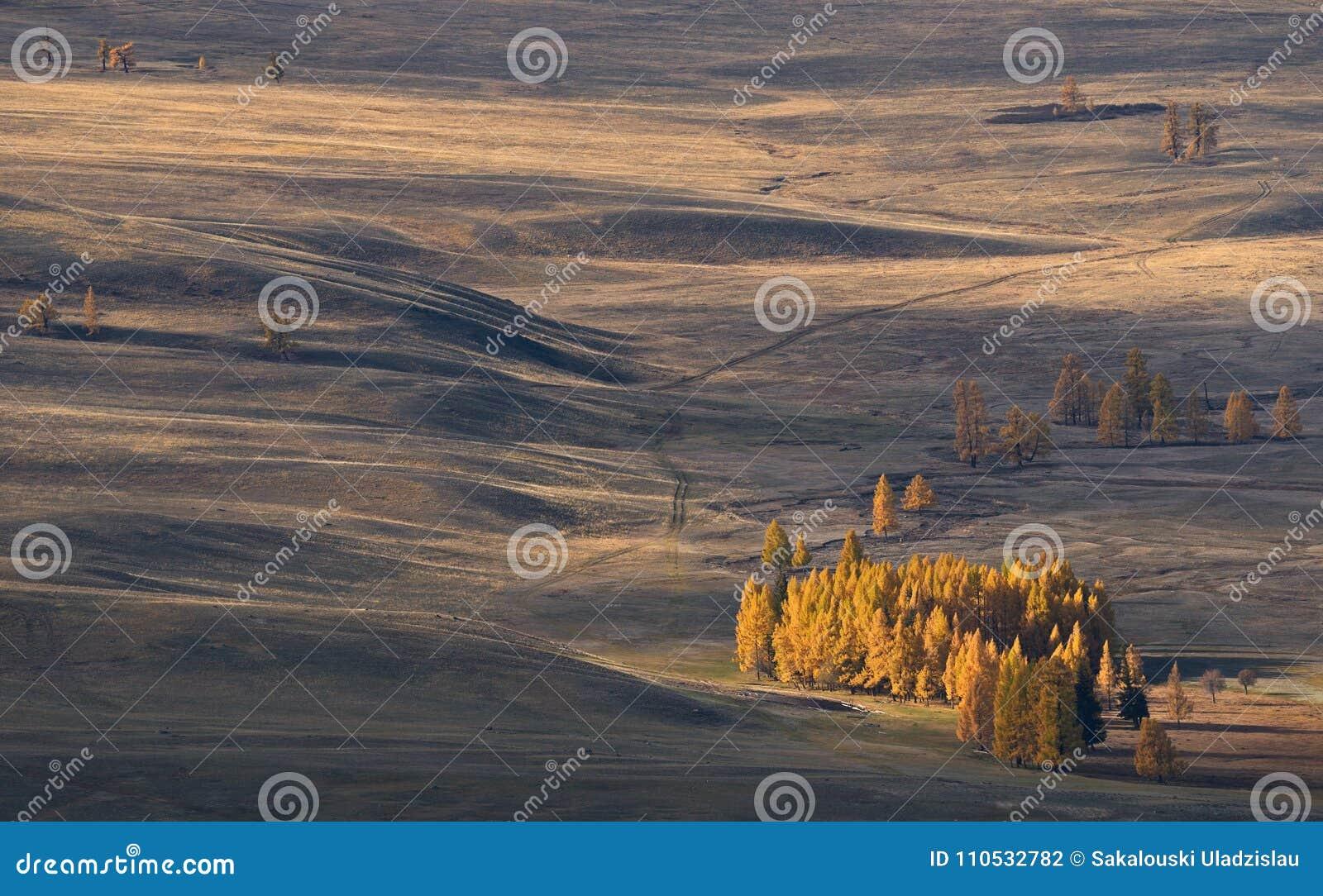 秋天蒙古风景:与落叶松属小树丛的高空干草原,照亮由太阳 在干草原的路 西部