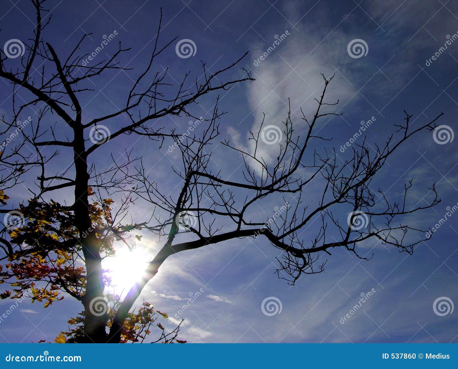 Download 秋天蓝天星期日顶层结构树 库存照片. 图片 包括有 介绍, 纹理, 透视图, 季节, 结算, 蓝色, 欢悦, 装饰 - 537860