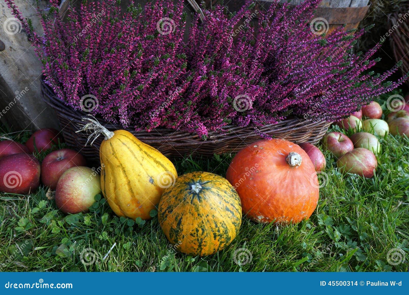 秋天装饰、南瓜、南瓜、石南花花和苹果