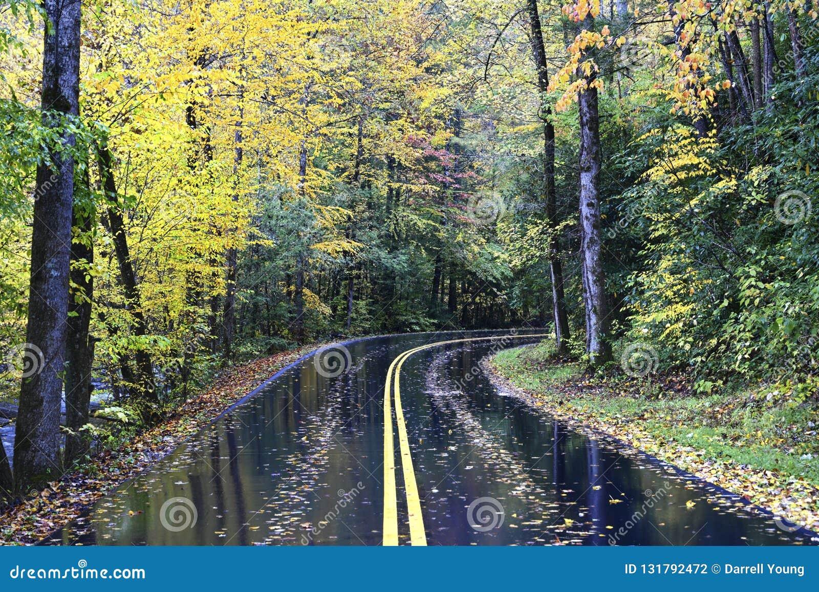 秋天路在大烟山,田纳西,美国