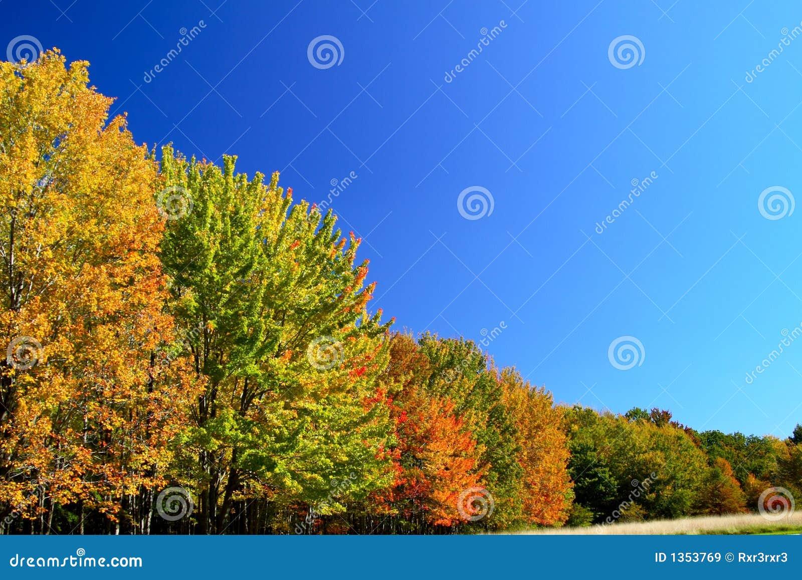 秋天透视图