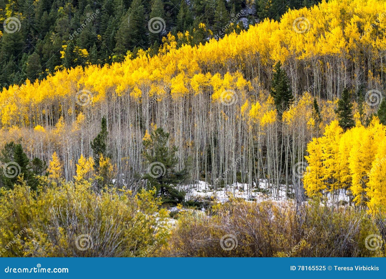 秋天颜色和雪在科罗拉多