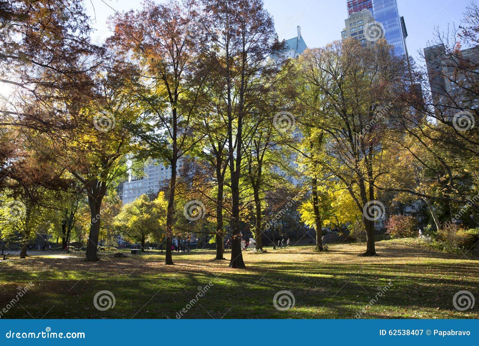 秋天颜色的中央公园纽约