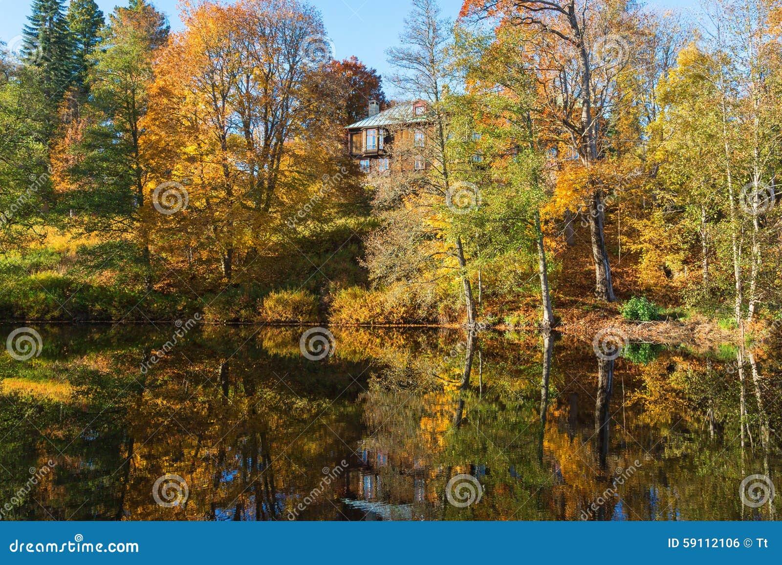 秋天颜色的落叶林