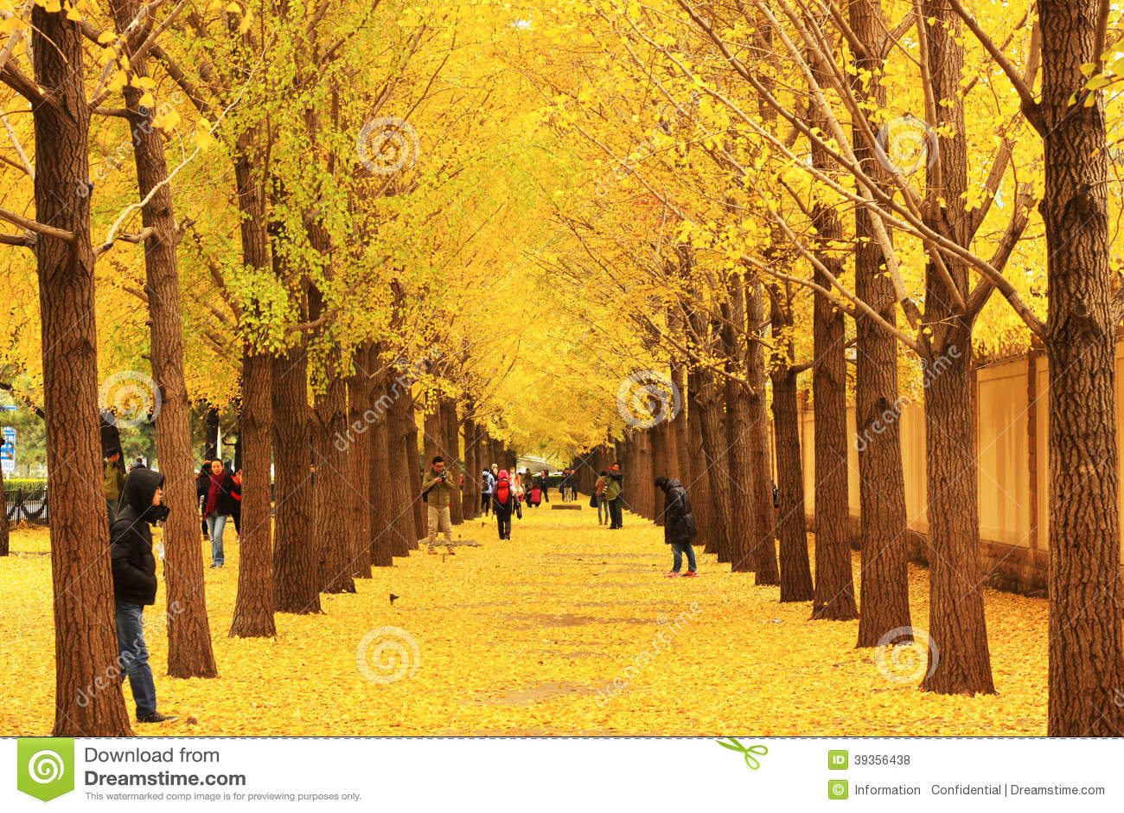 秋天风景在北京