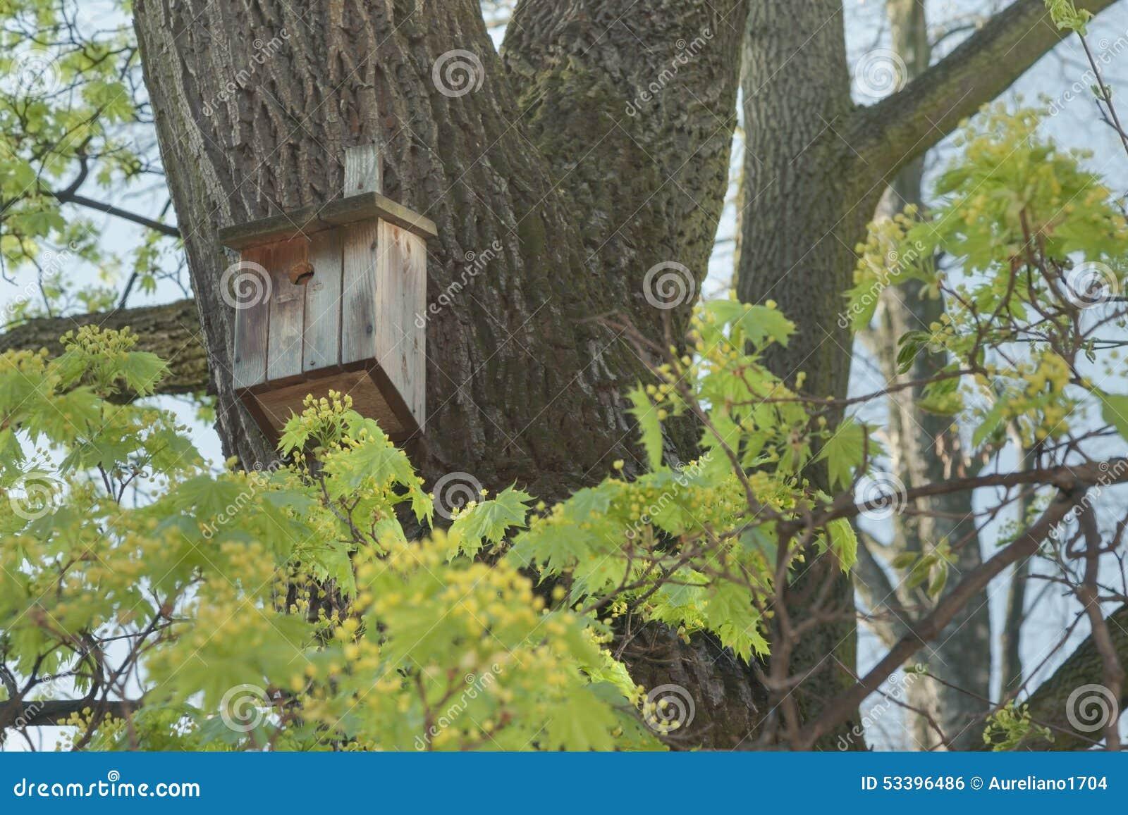 秋天鸟舍离开结构树枝杈黄色