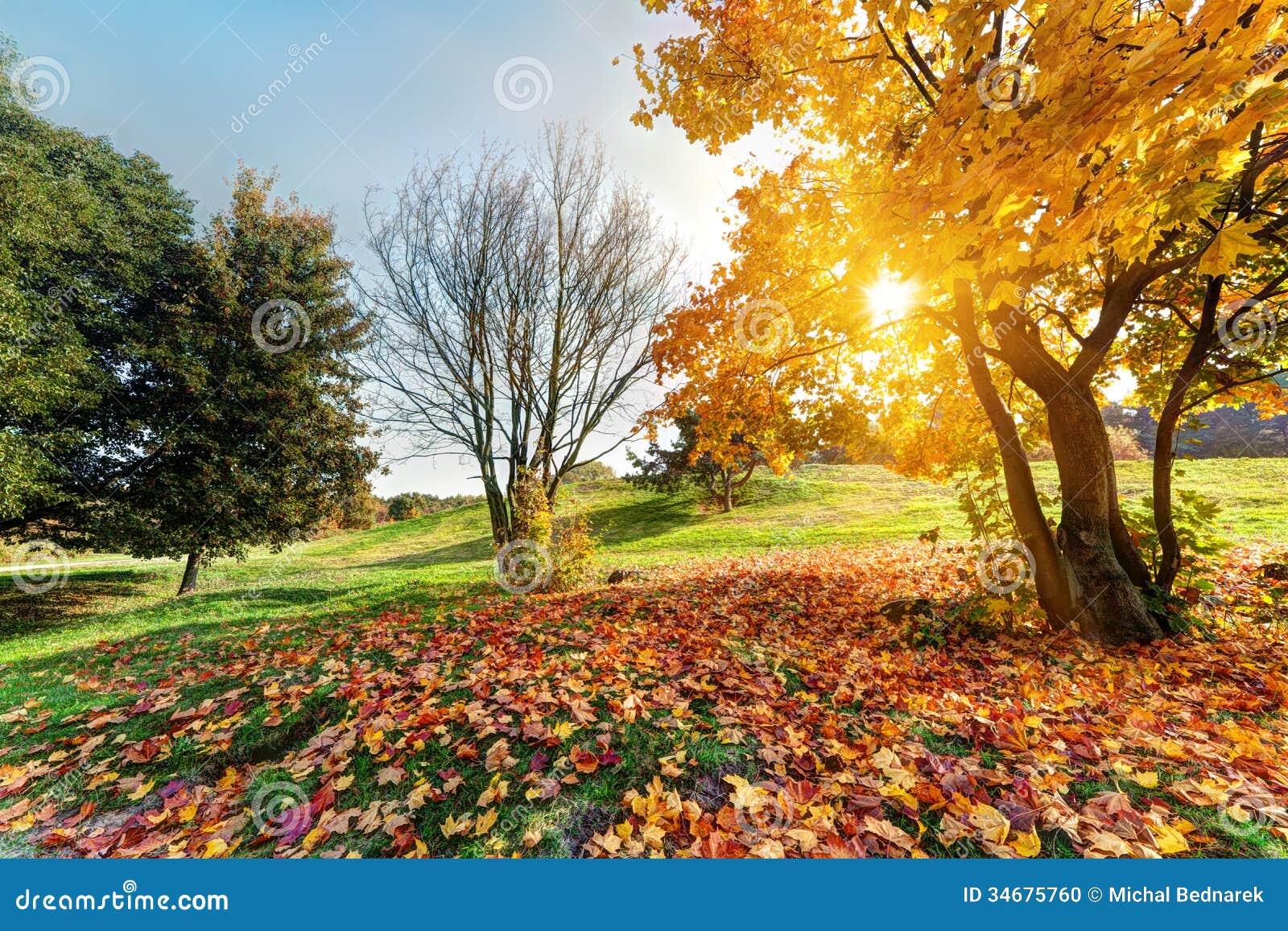 秋天,秋天风景在公园