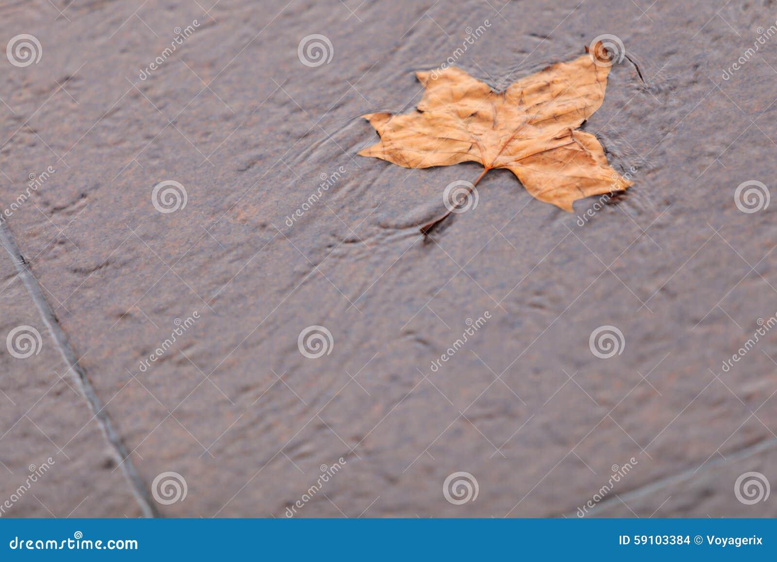 秋天 在地面的唯一秋天枫叶