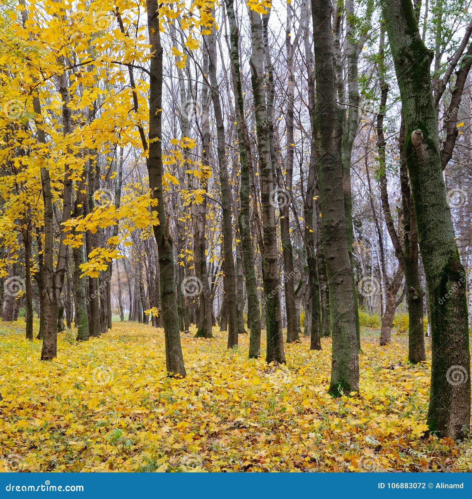 秋季森林 后秋天 阴云密布