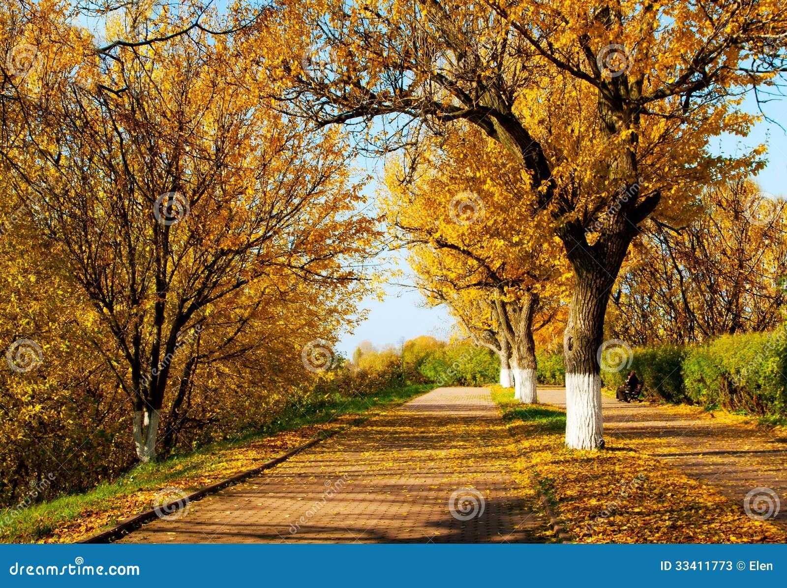 秋季�9b�9/&�..��z(_秋季自然,风景在中央公园, kostroma市.