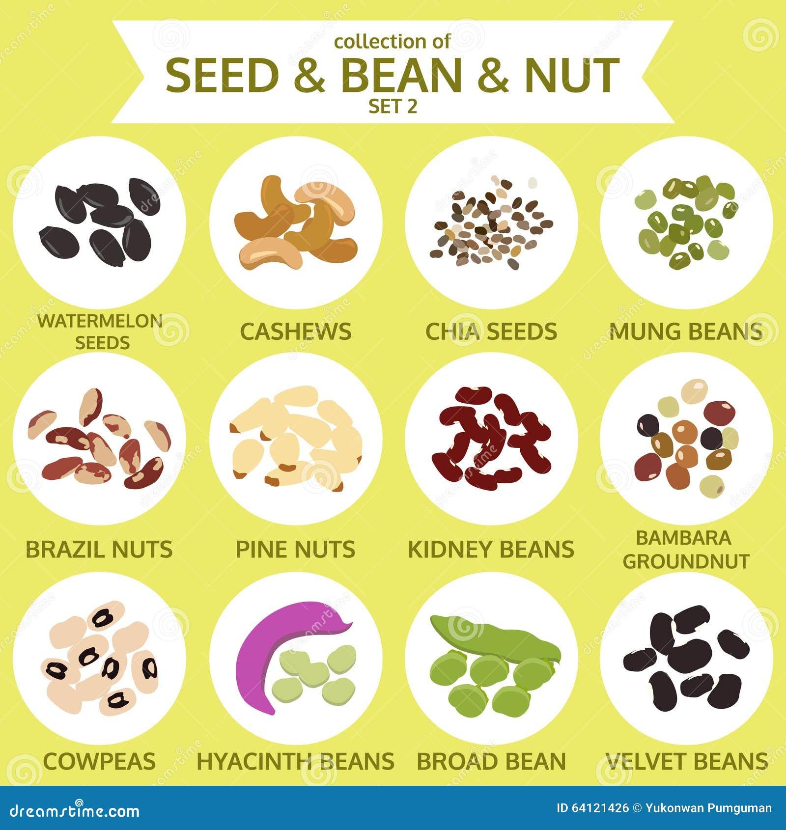 种子的汇集&豆&坚果设置了两,食物,传染媒介