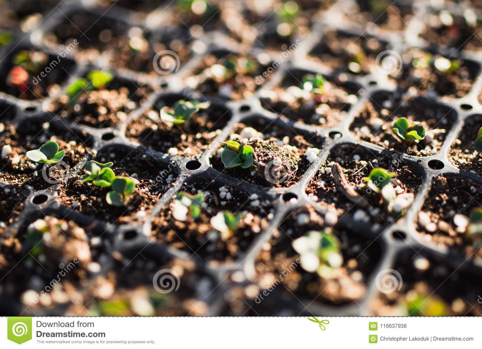 种植一个新的庭院的3