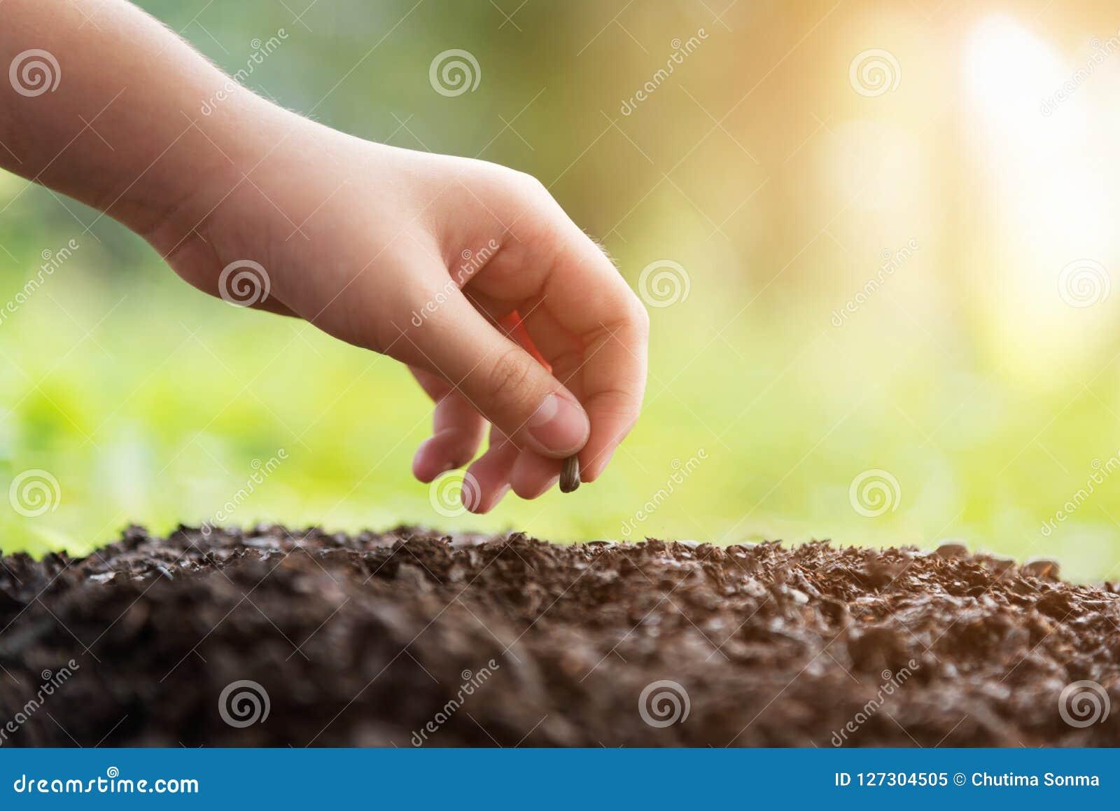 种植在土壤农业的孩子的手一颗种子在自然绿色