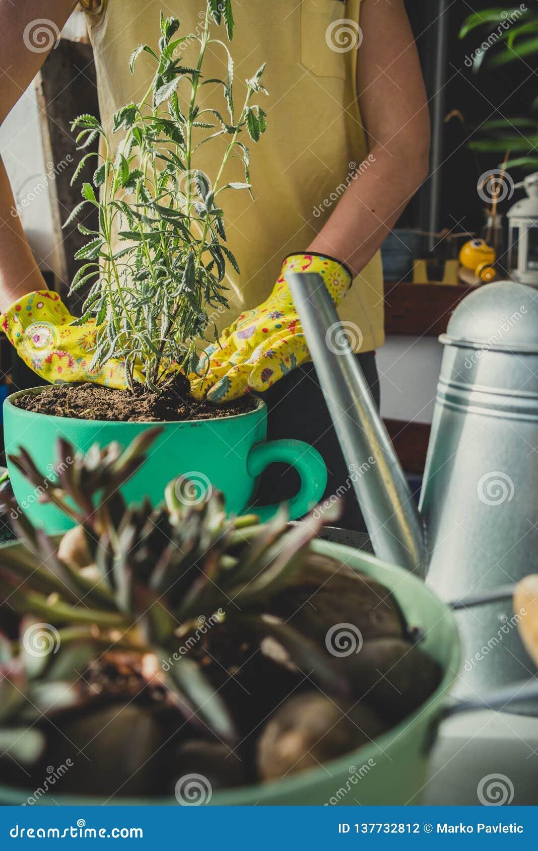 种植淡紫色植物的女孩