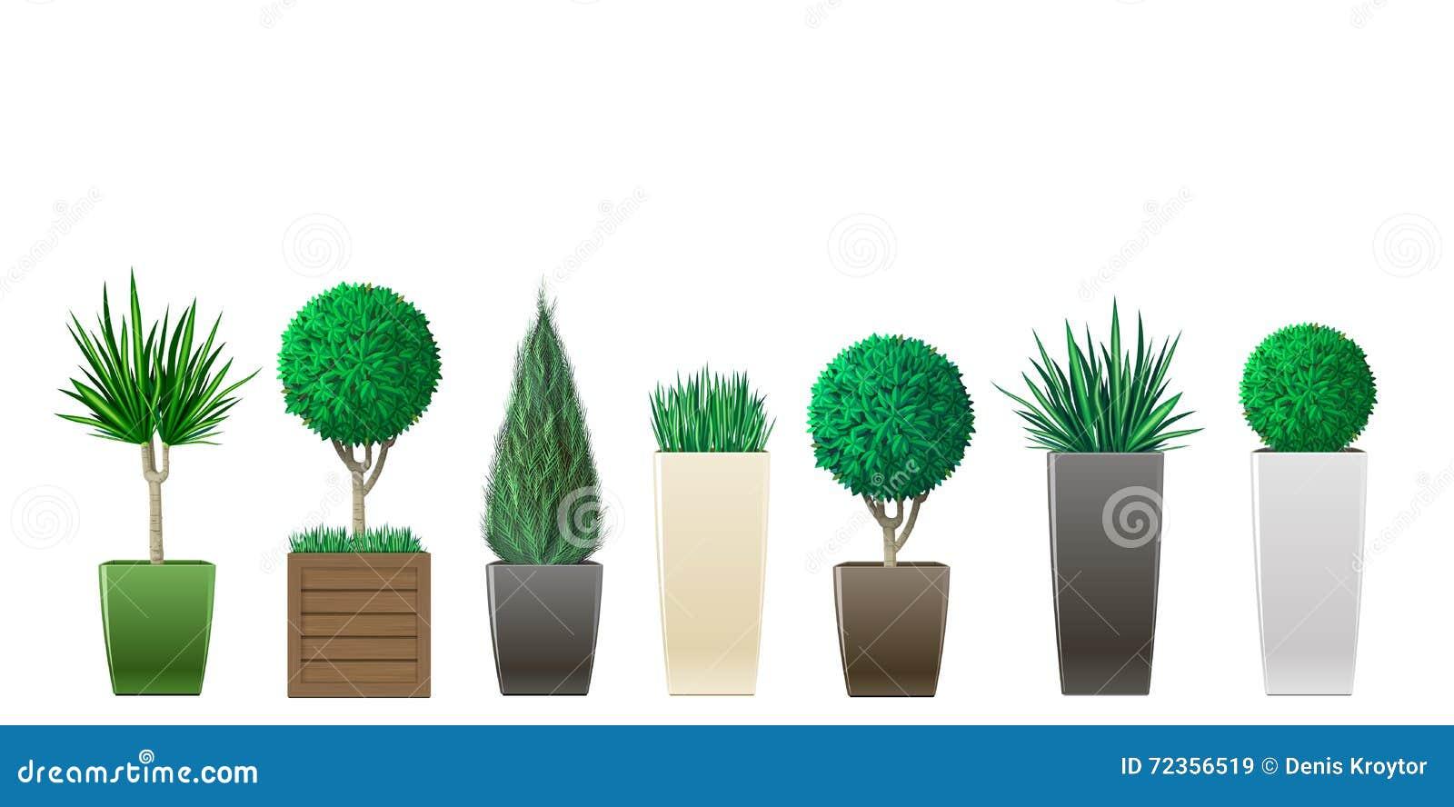 种植盆的集