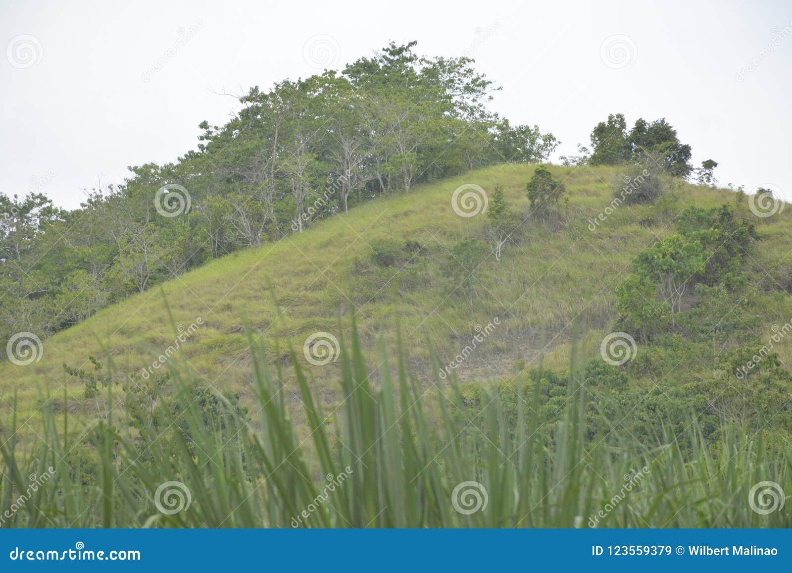 种田在Mahayahay, Hagonoy,南达沃省,菲律宾的山地