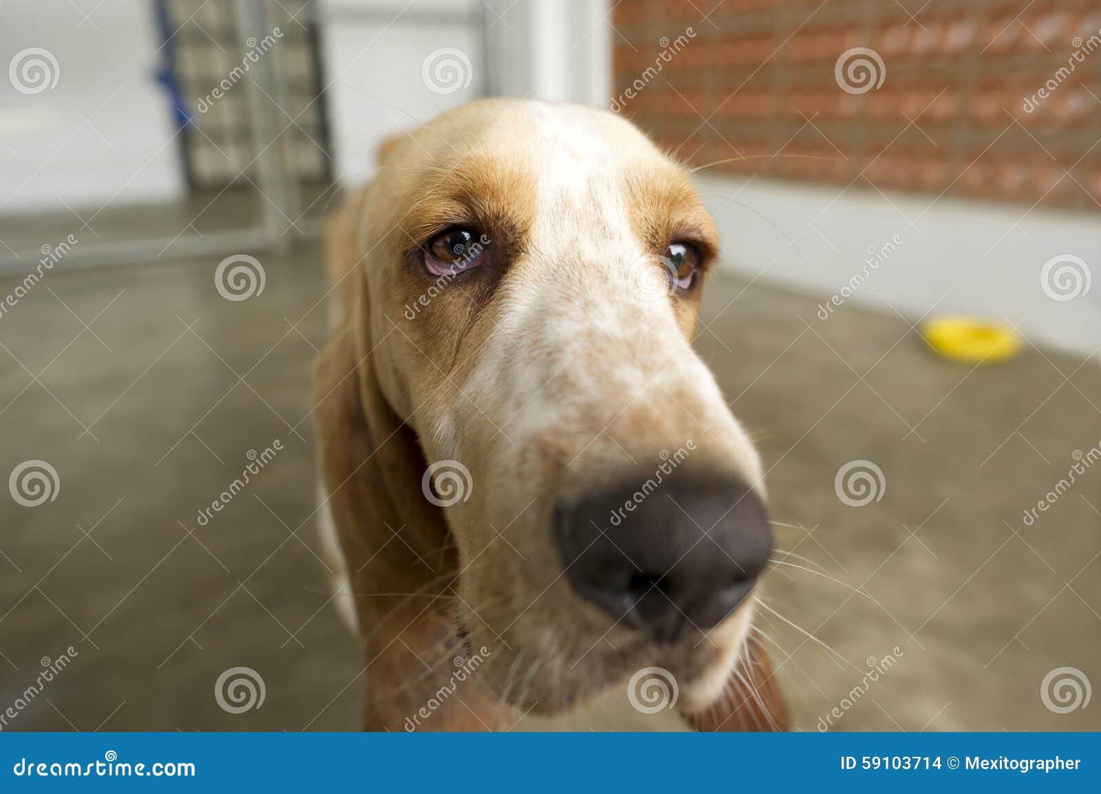 滑稽的狗特写镜头
