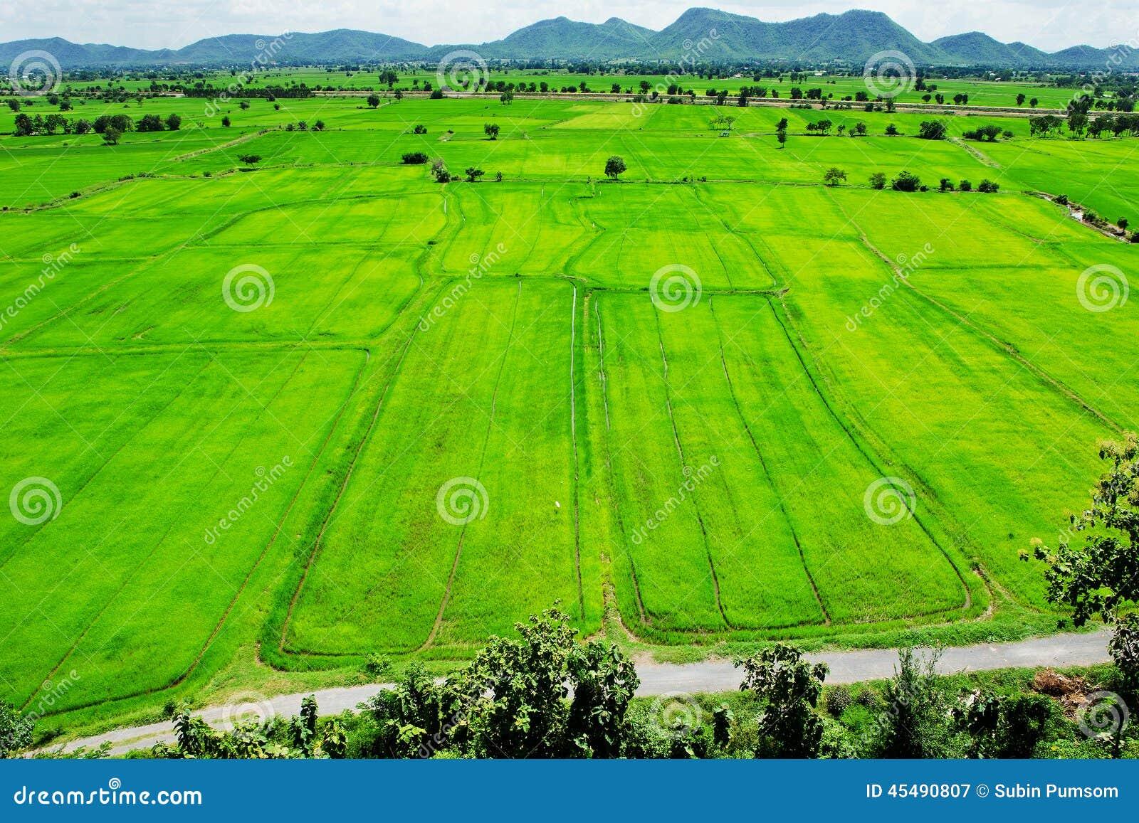 空中区绿色农村视图
