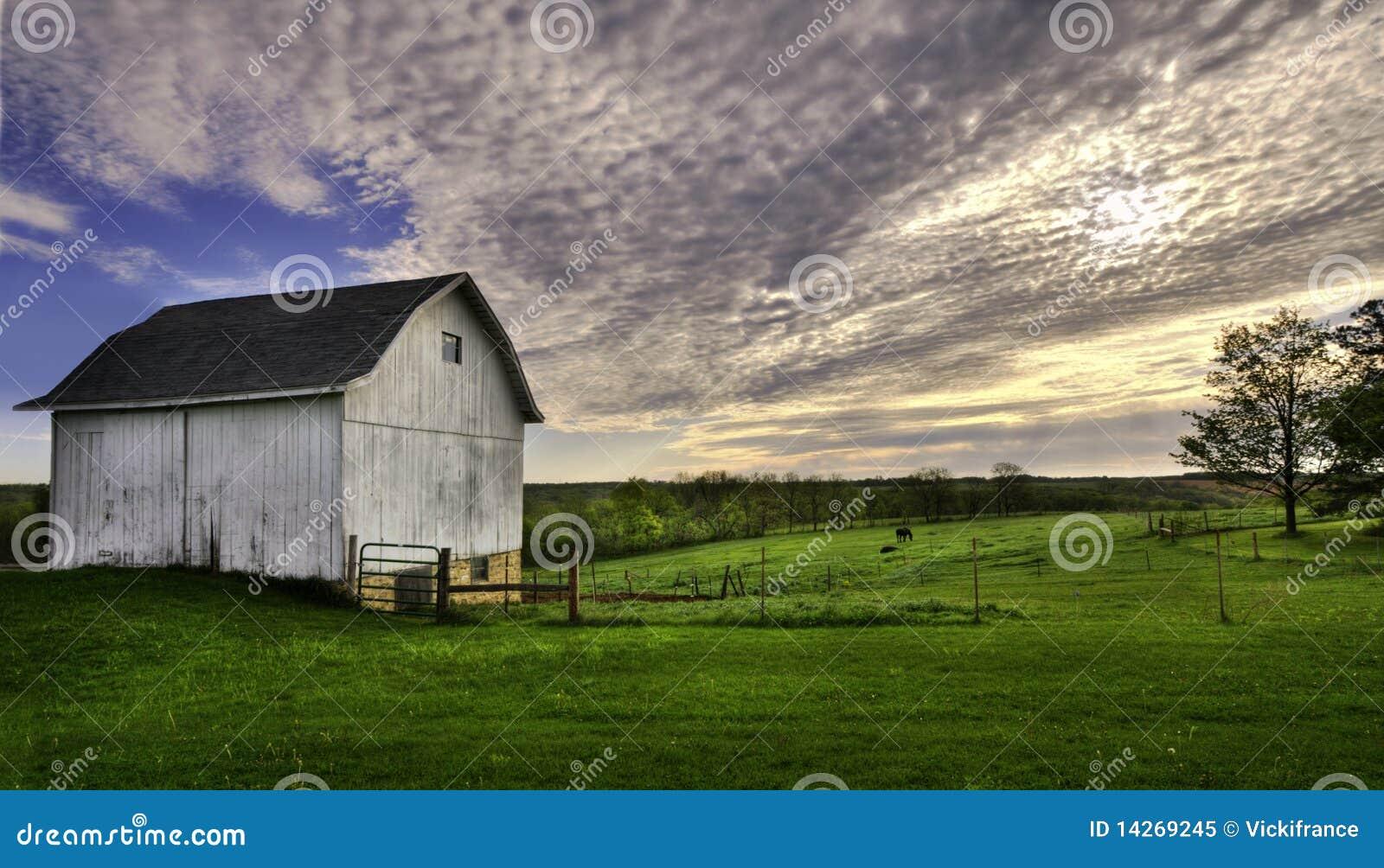 空白谷仓的马