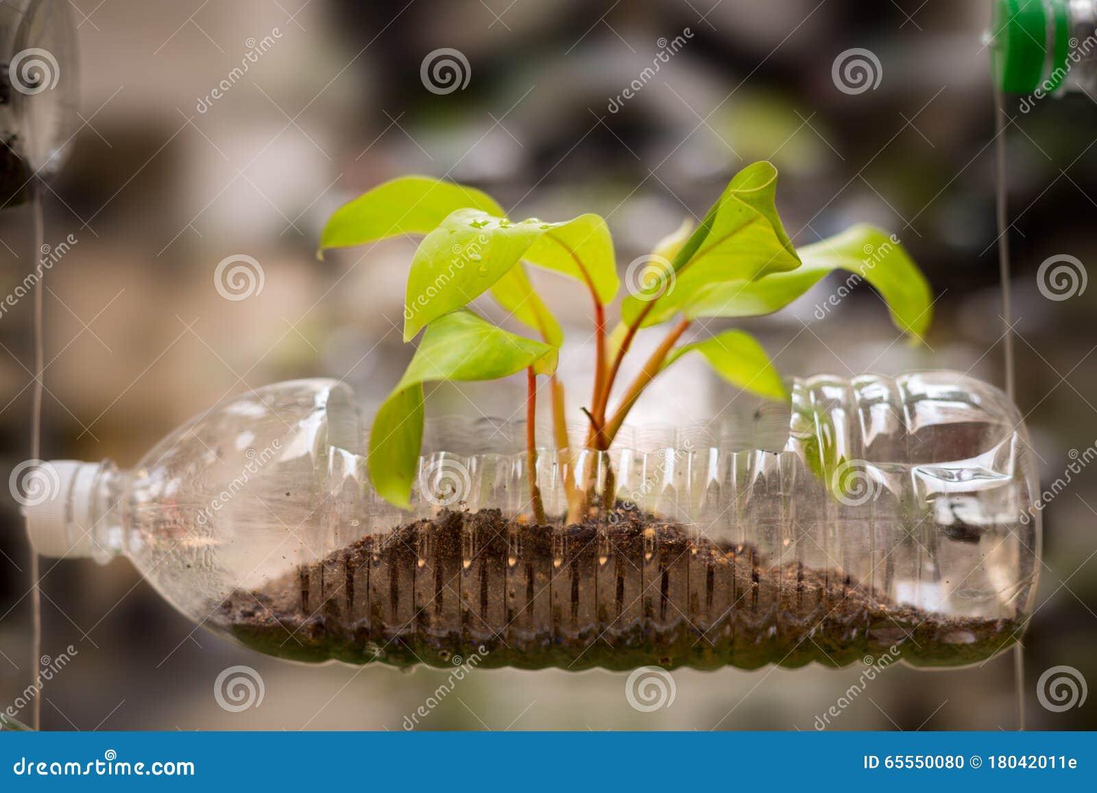 空的塑料瓶用途作为生长植物的, recyc一个容器