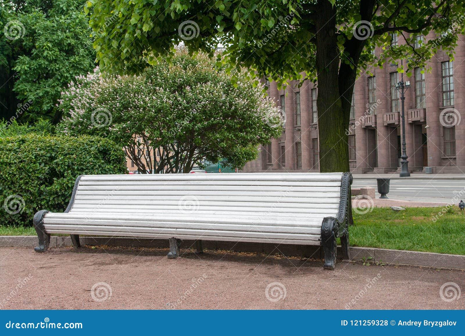 空的白色木庭院长凳在开花的树下在城市公园 放松的地方的概念