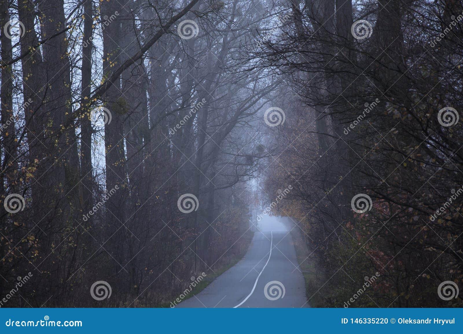 空的路在穿过森林的早晨盖在薄雾或雾