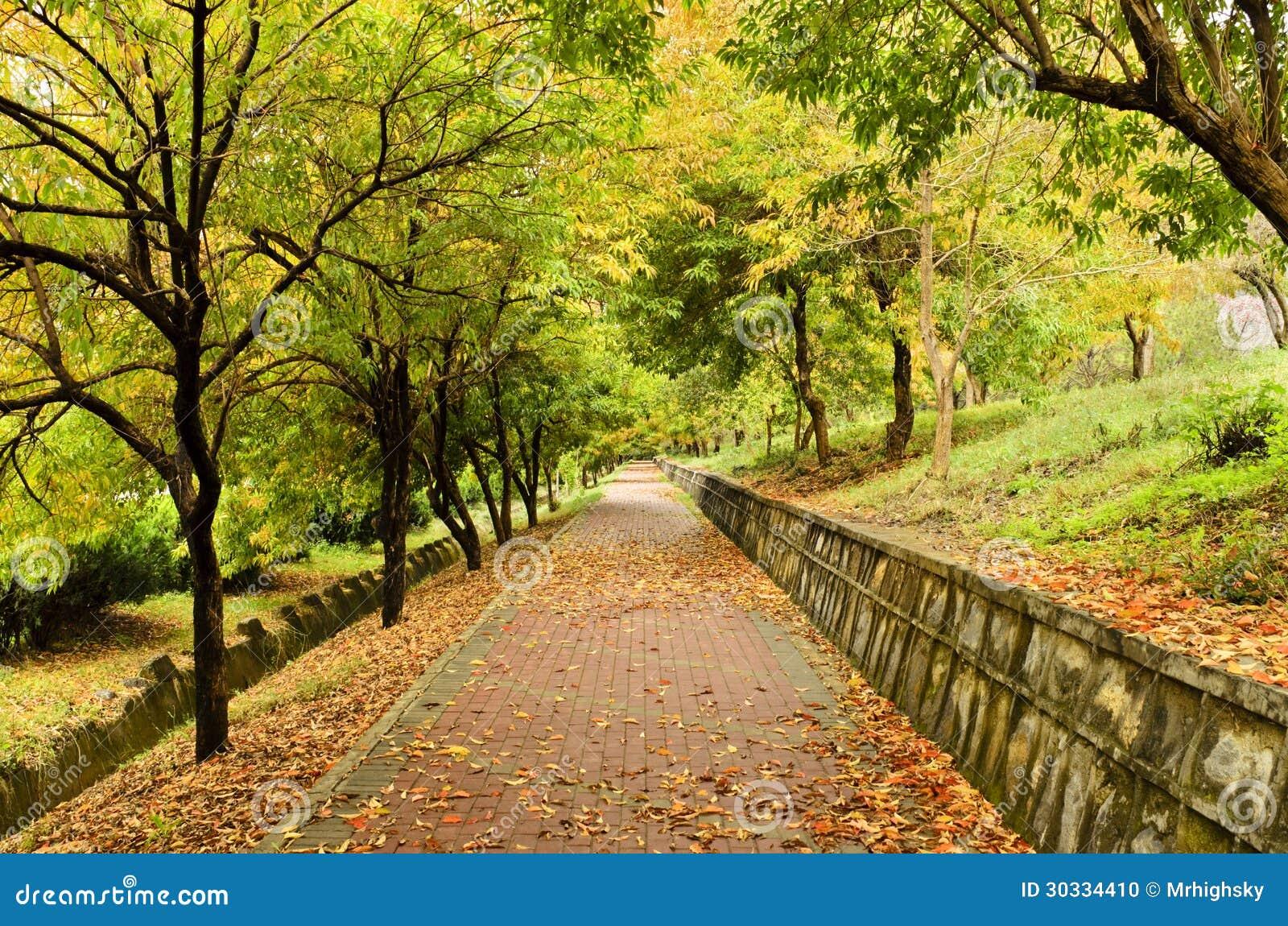 空的道路在秋天