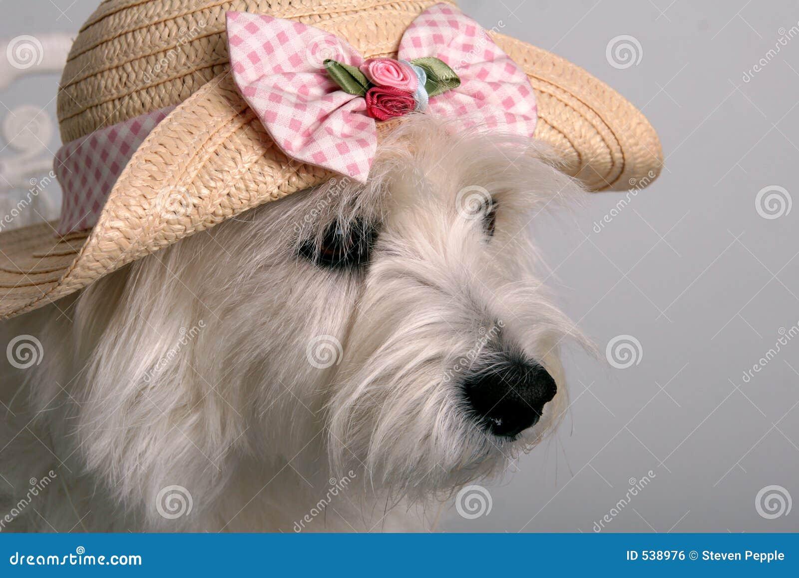 Download 穿戴的弹簧 库存照片. 图片 包括有 bonneville, 宠物, 乐趣, 高地, 帽子, 空白, 春天, 纵向 - 538976
