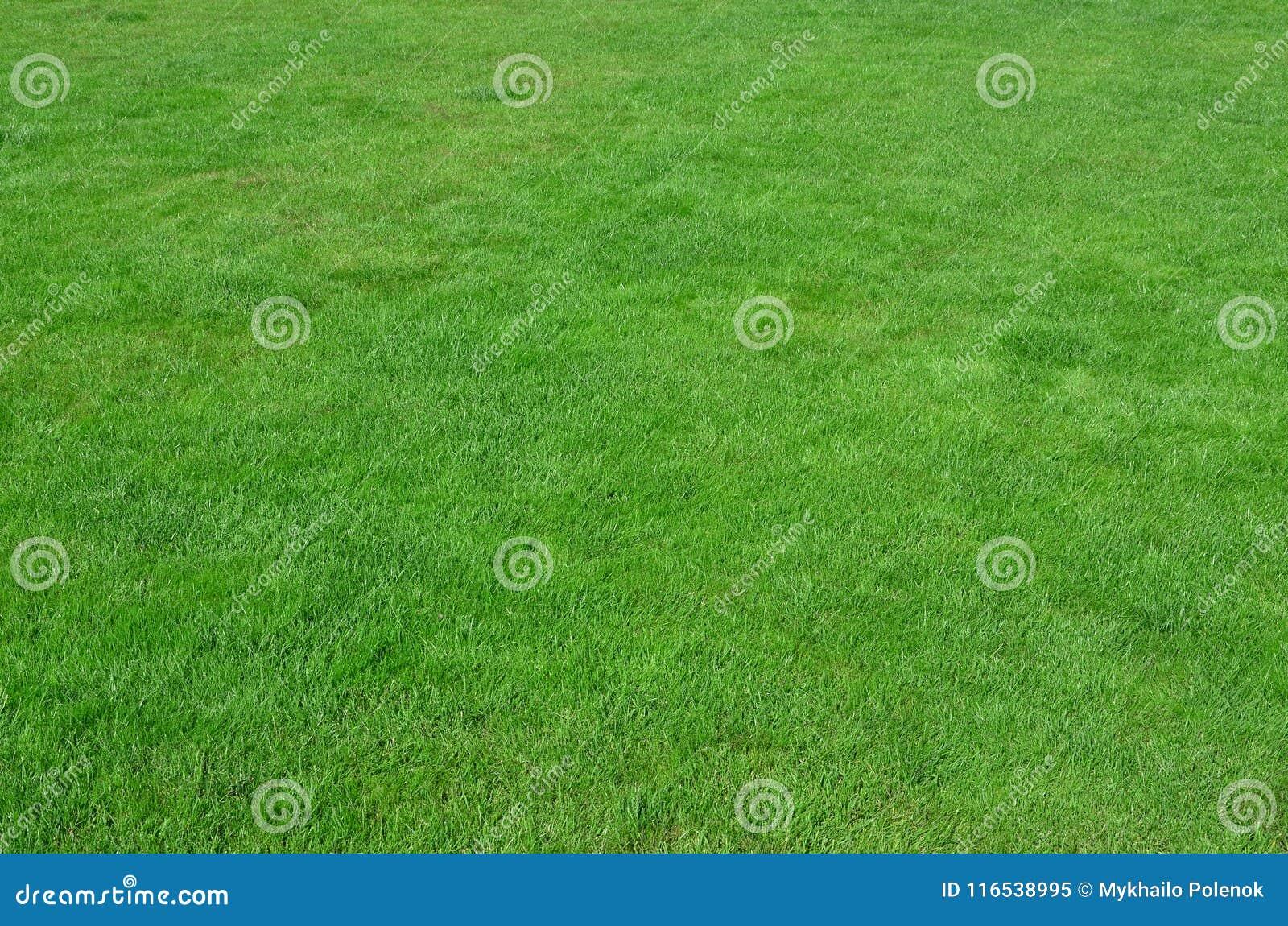 站点的照片有均匀播种的绿草的 新鲜的绿色gras草坪或胡同