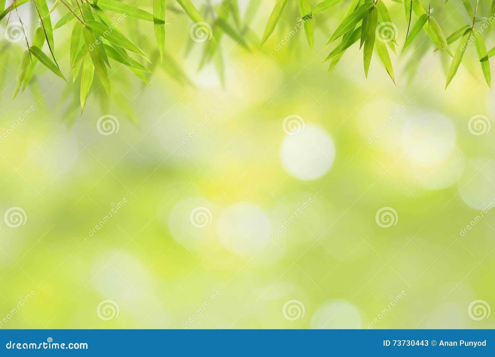 竹叶子和软的绿色bokeh背景