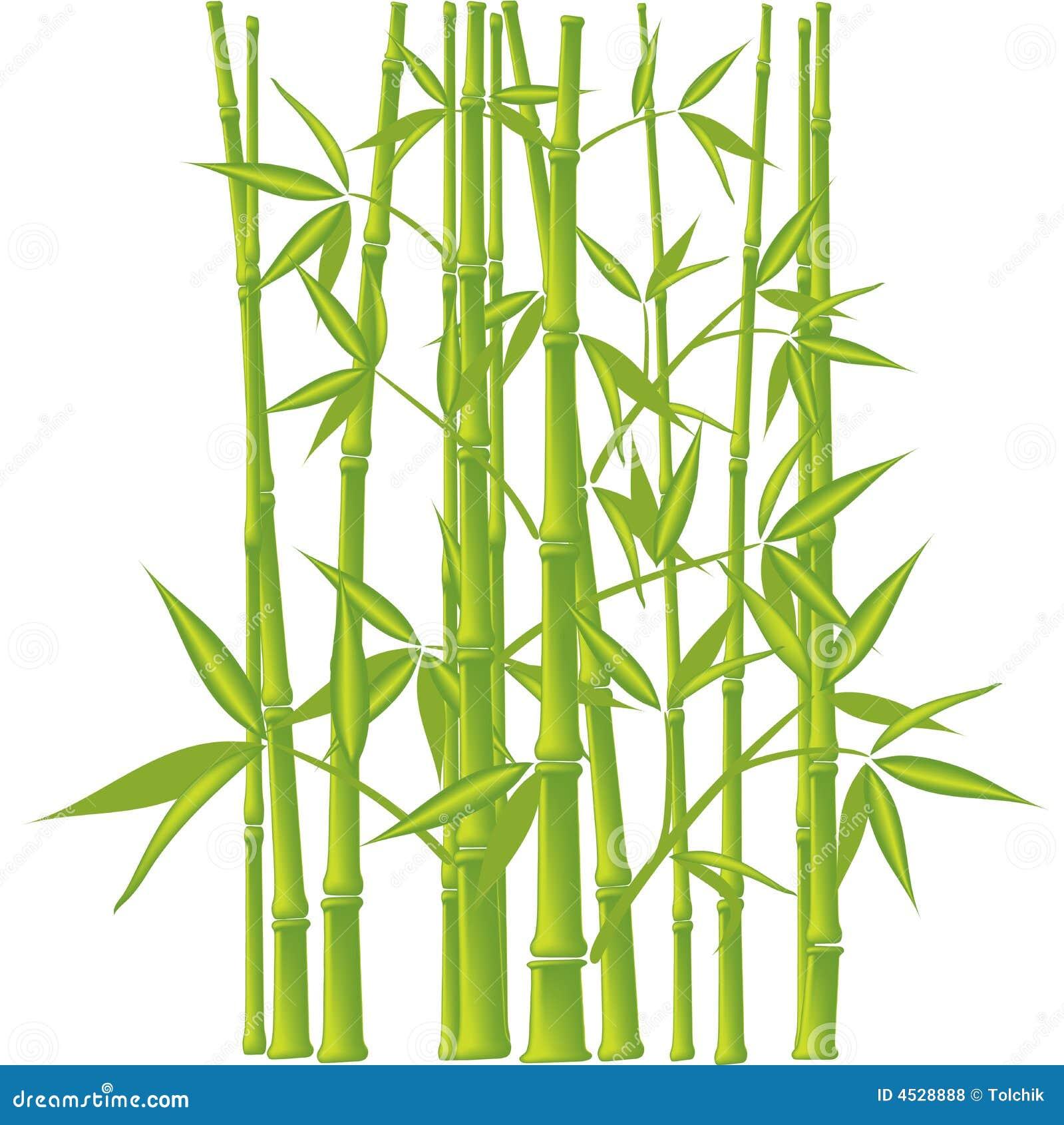 竹子,向量(滤网)
