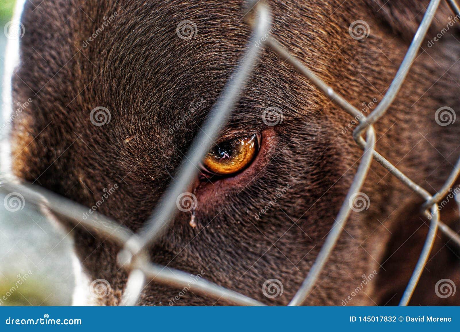 笼中的逗人喜爱的拉布拉多狗接近的画象