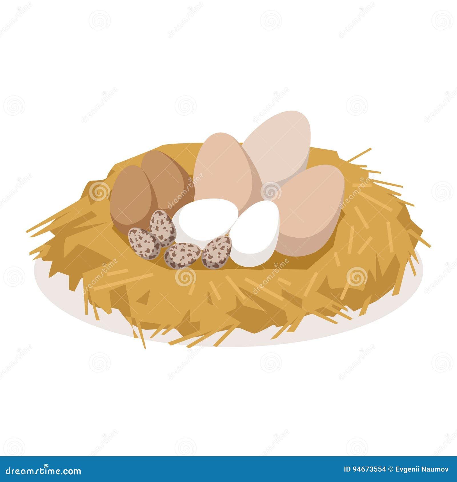 筑巢用不同的鸟,种禽传染媒介例证鸡蛋