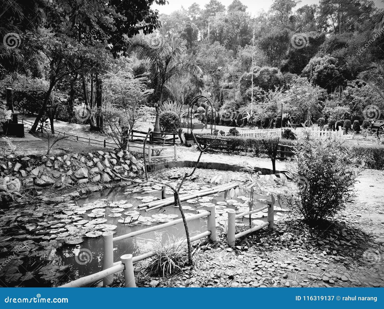 筑成池塘瓣 植物群和动物区系是这个地方秀丽  对它的最好的春天的自然和花