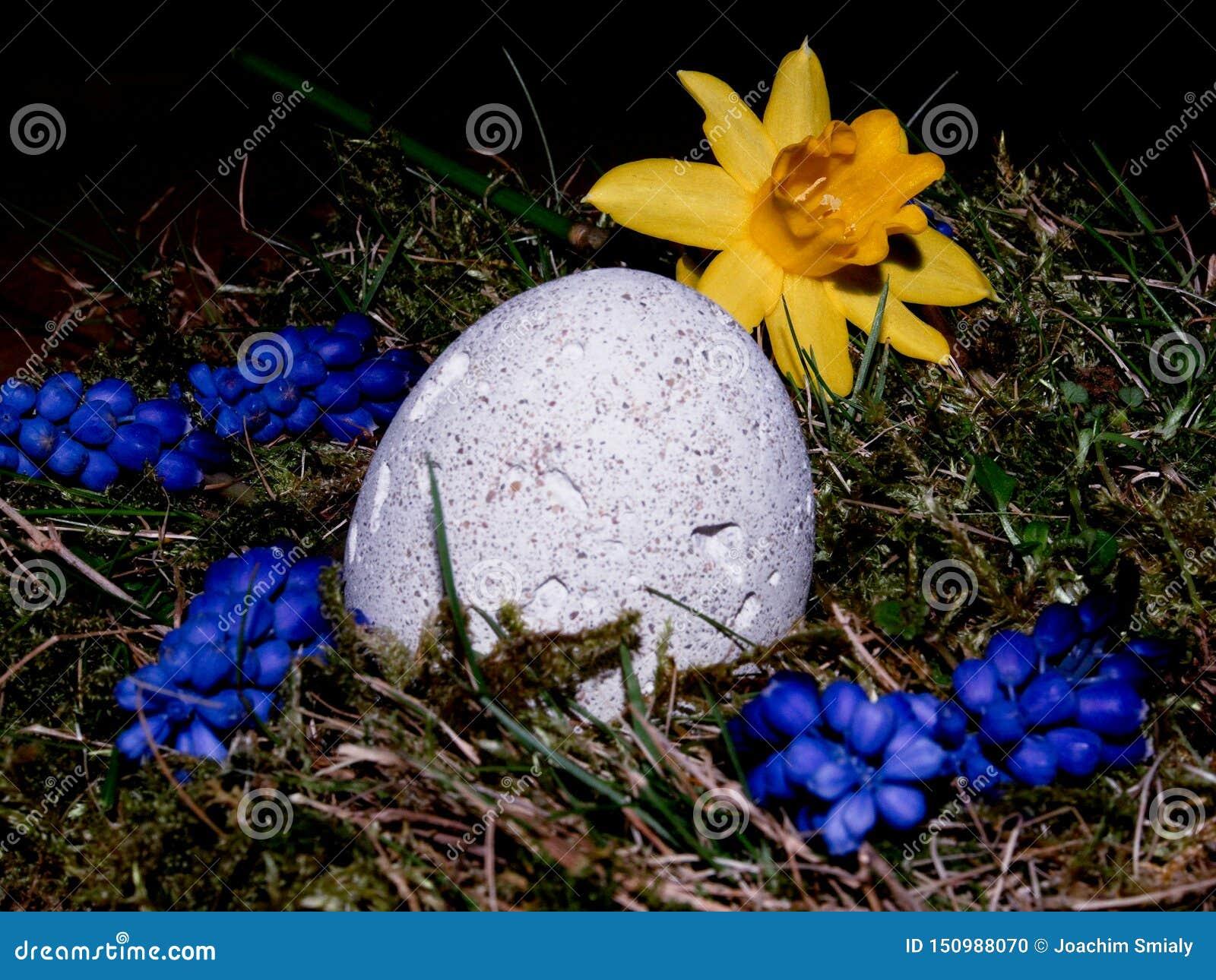 篮子用在白色背景的复活节彩蛋