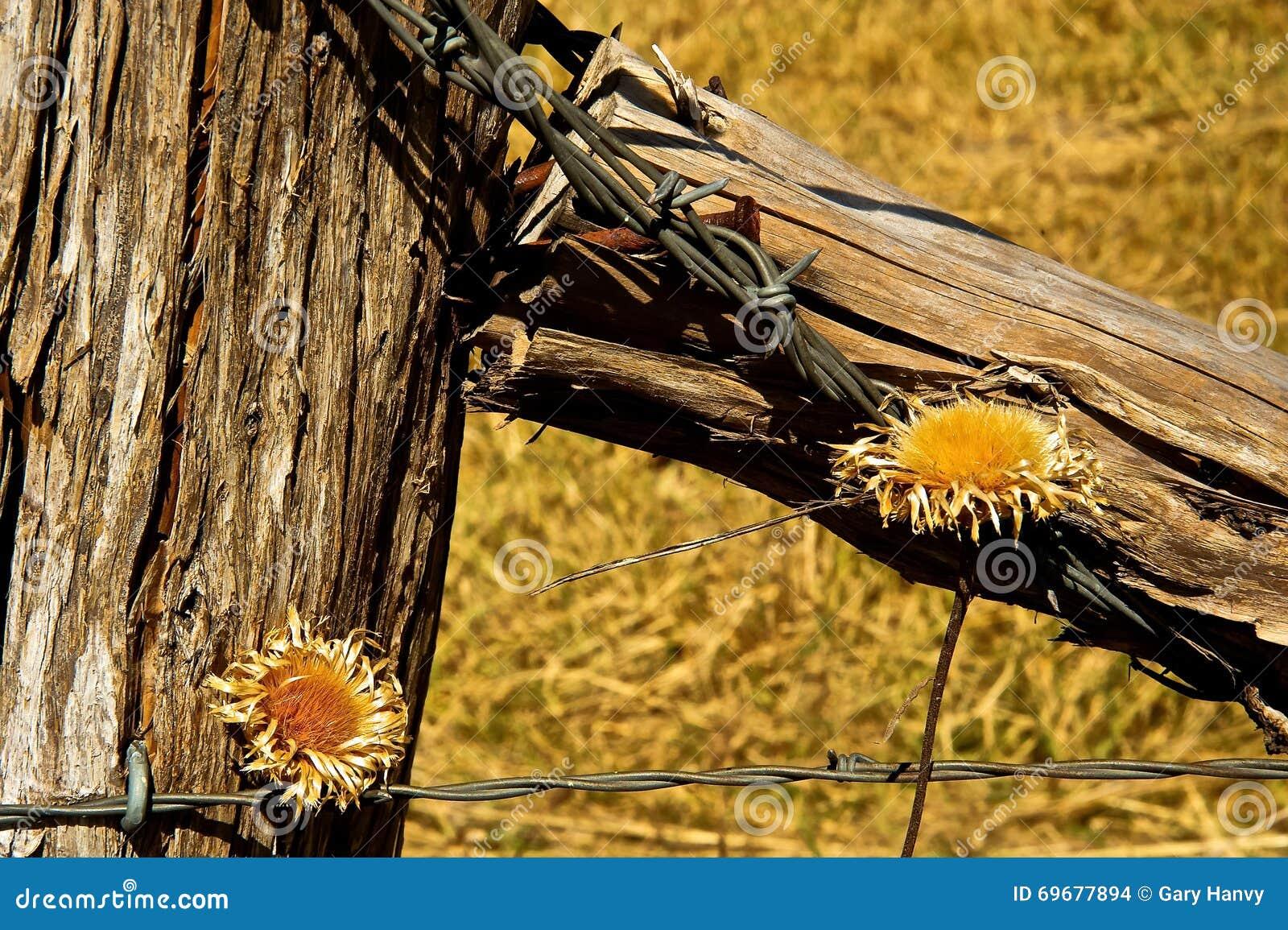 篱芭岗位铁丝网和干花