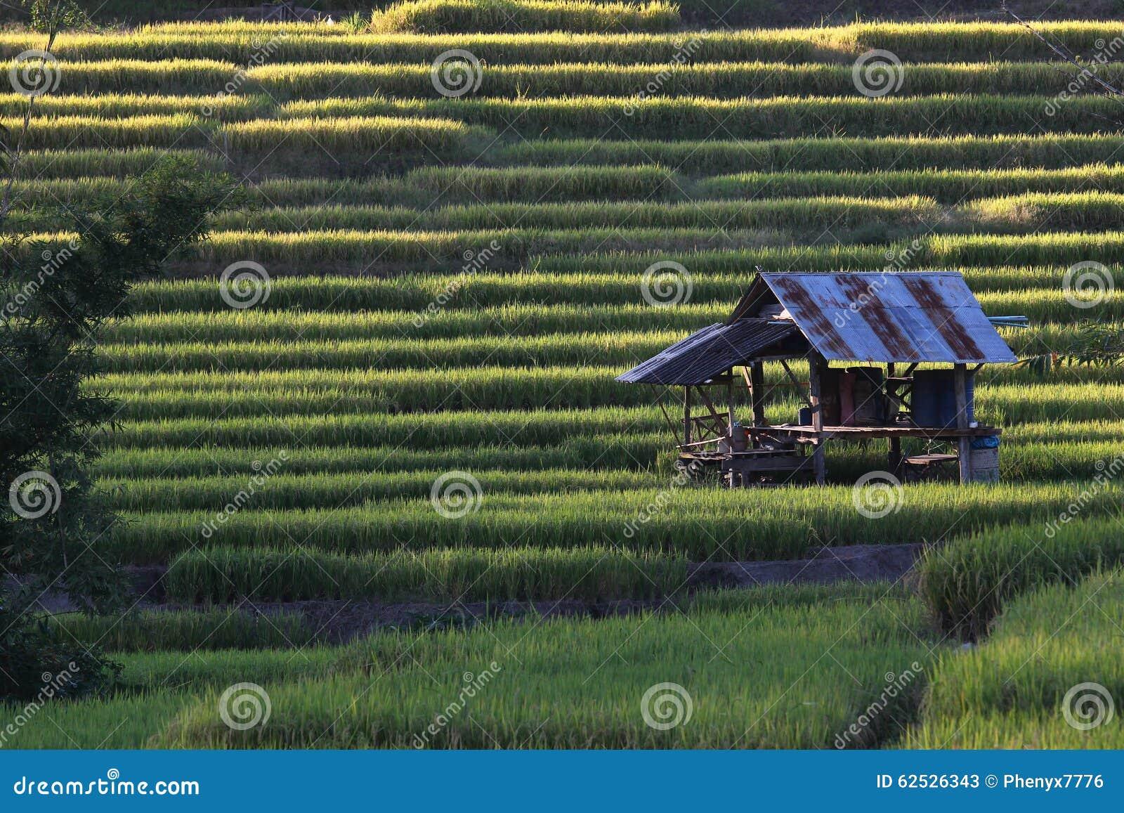 米大阳台,清迈,泰国