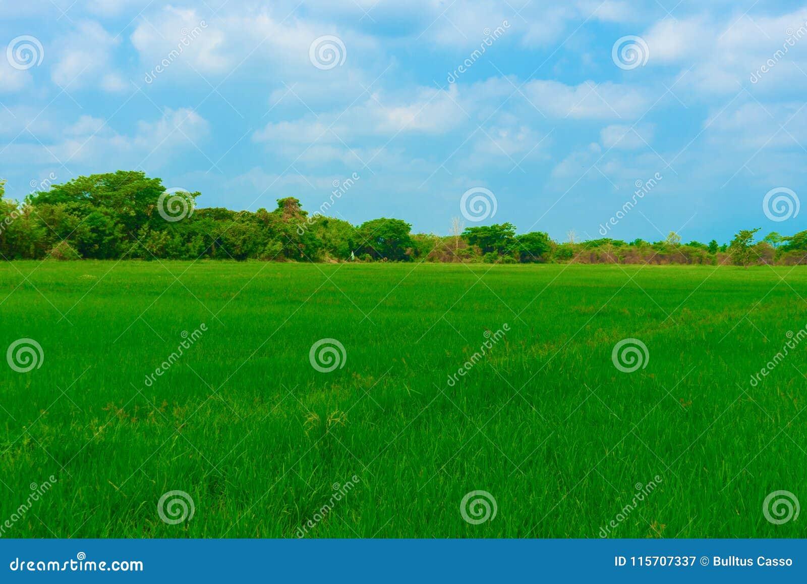 米天空是领域的与树和绿色利大全设计图片字体图片