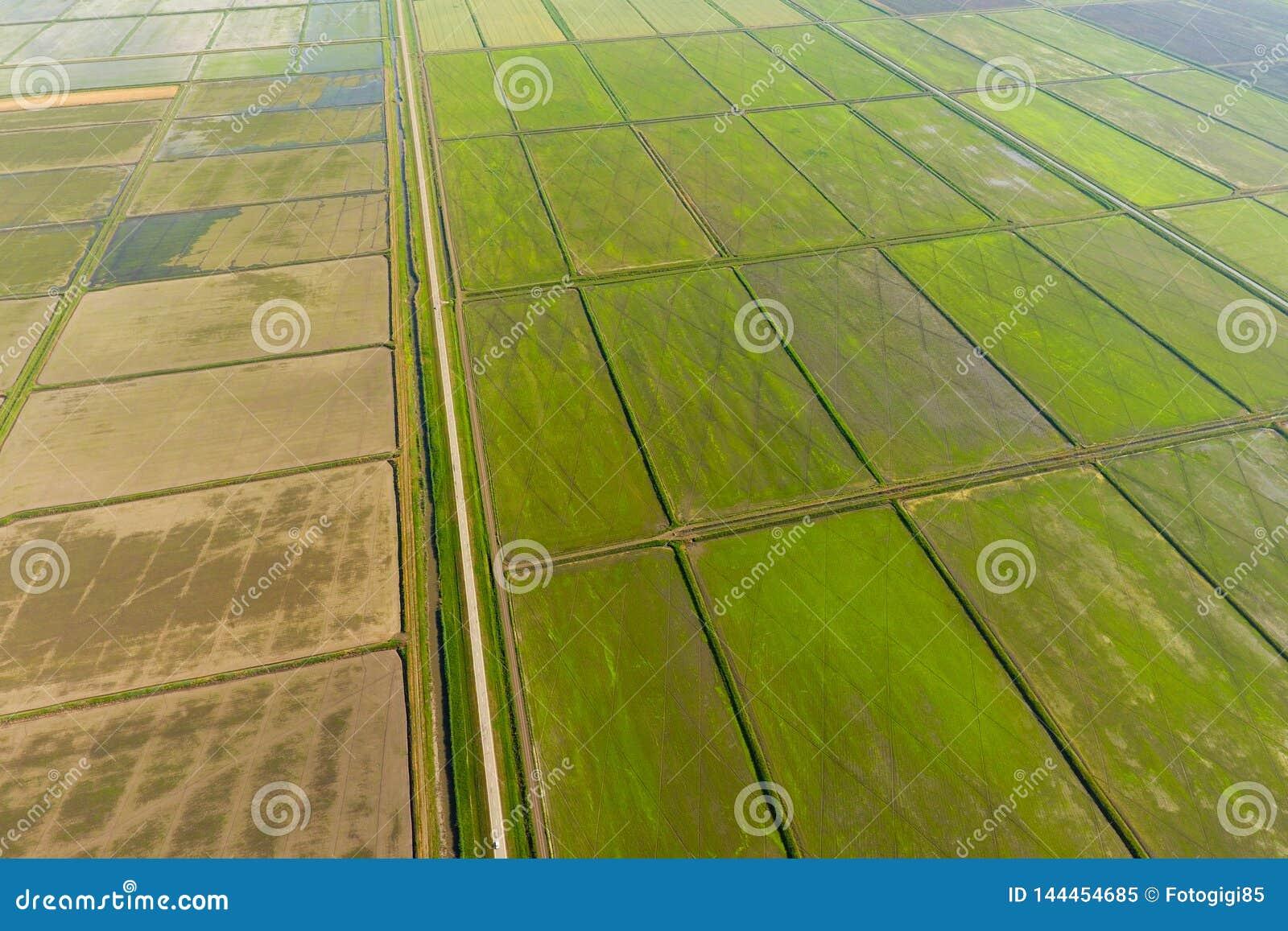 米领域用水充斥 被充斥的稻米 种植在领域的米农业方法