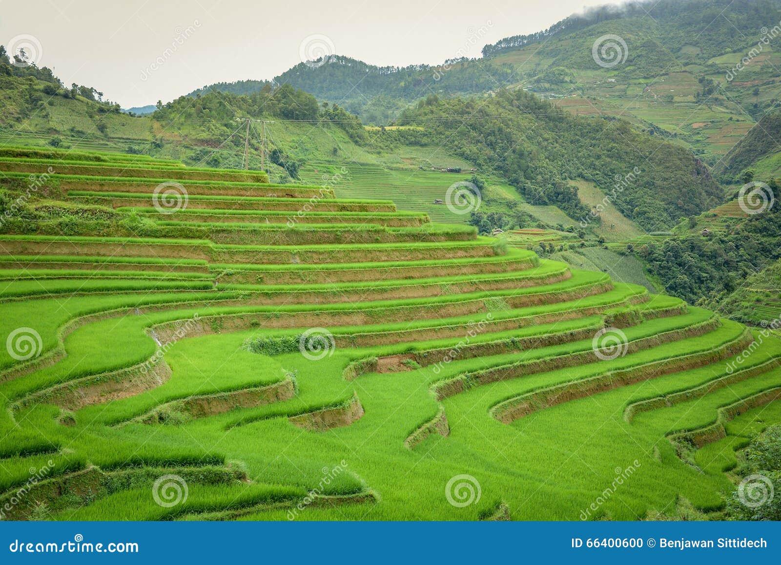 米领域露台在Mu Cang柴,越南