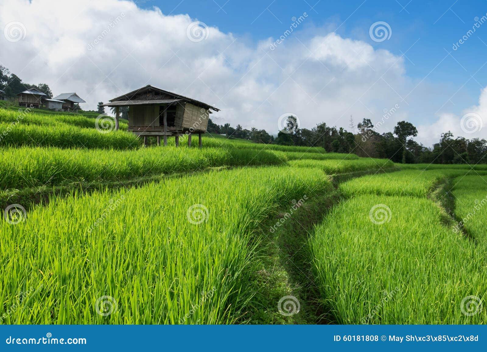 米领域,与美好的风景的农村山景