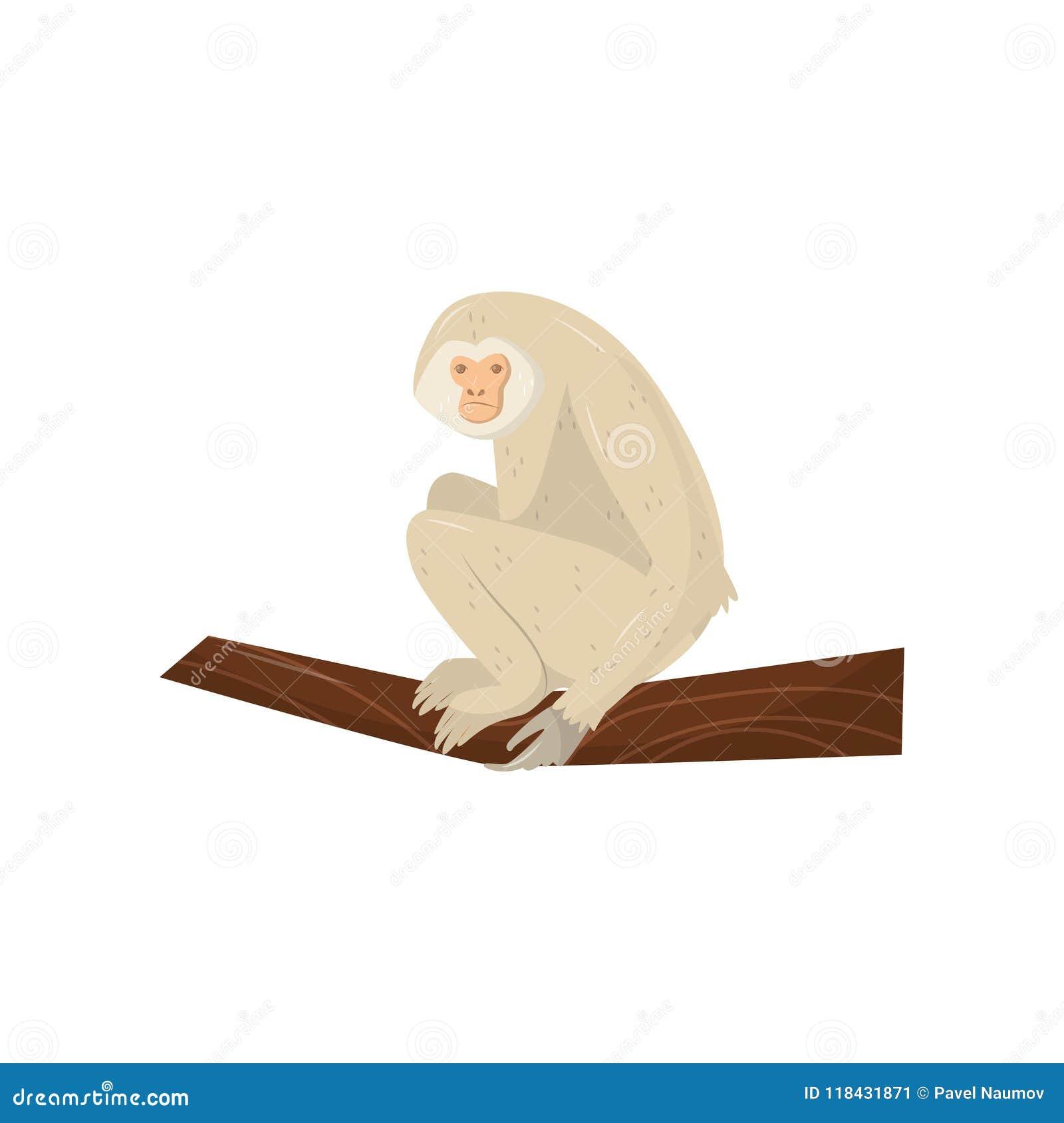 米黄长臂猿坐木分支 非洲动物通配 电视节目预告动物园公园海报或飞行物的平的传染媒介元素