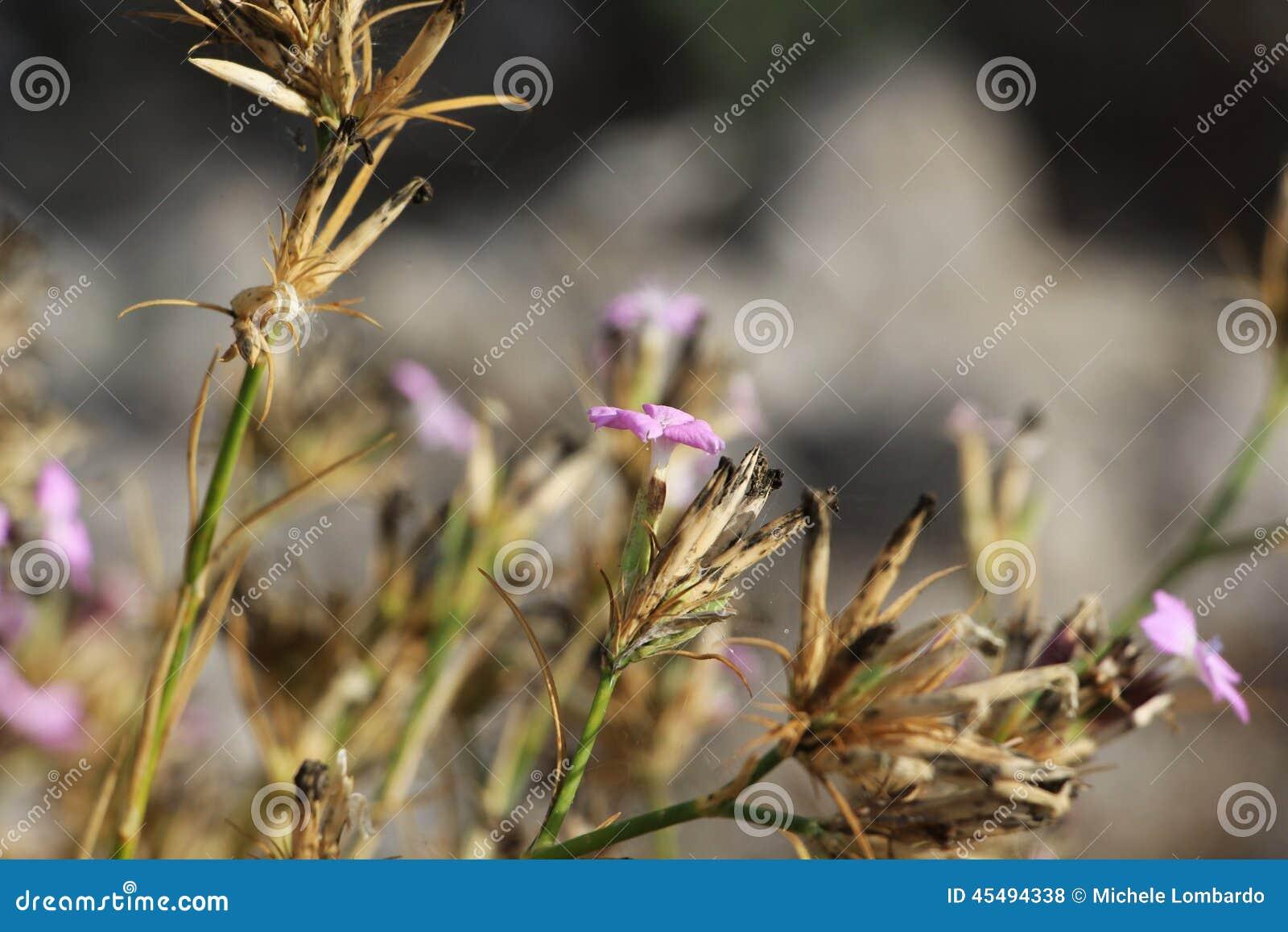 精美野花,丁香