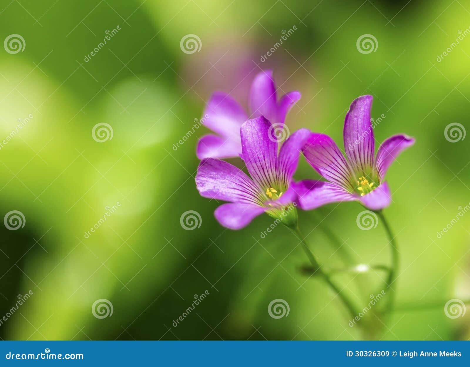 精美紫色野花