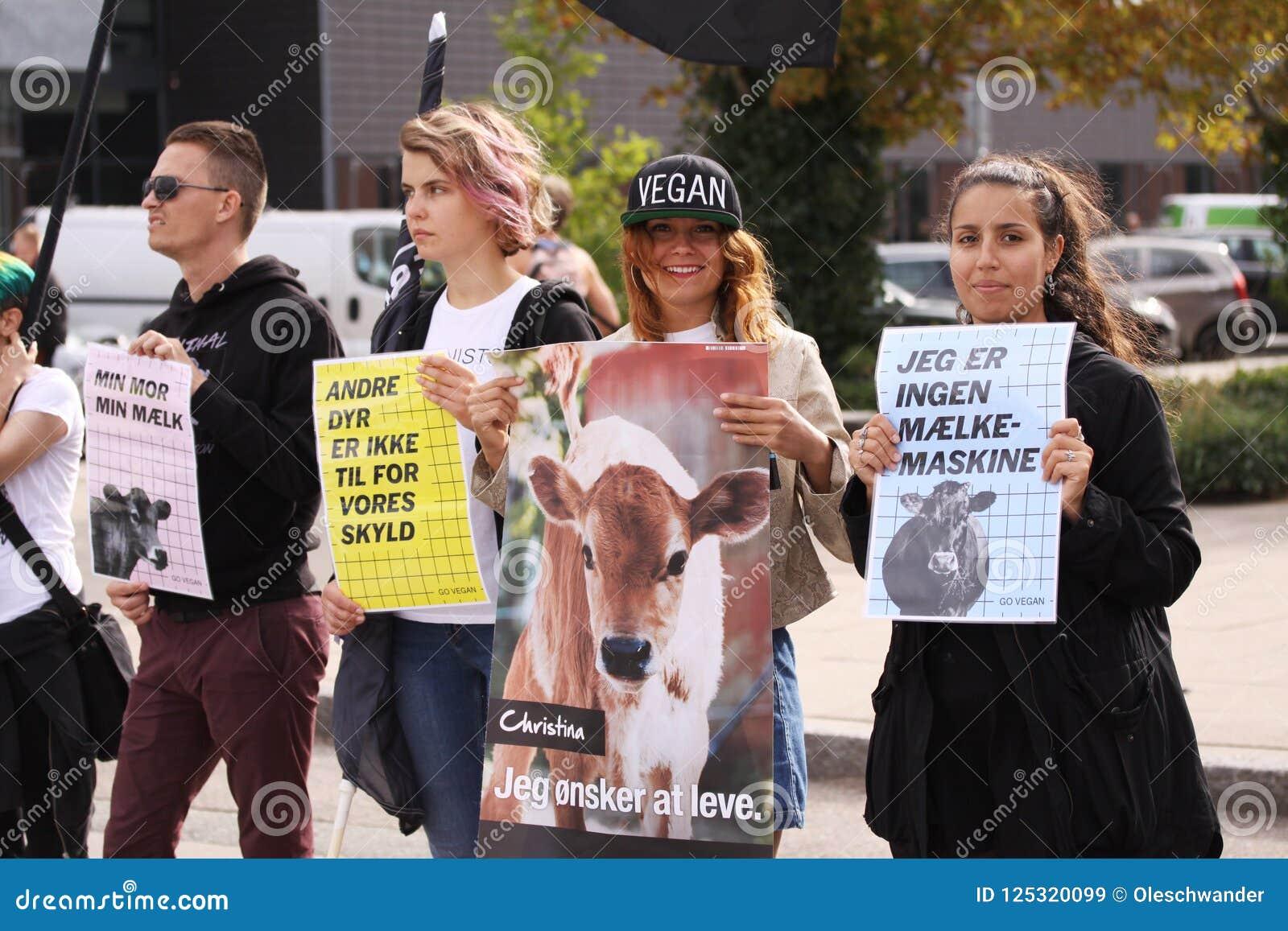素食主义者和素食主义者动物解放的抗议在示范反对惨暴往动物和吃肉和牛奶店p